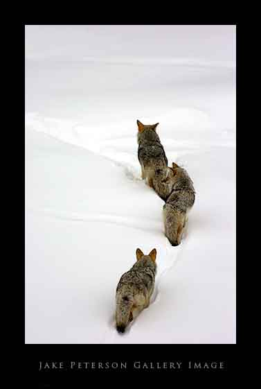 coyote-pack-1_20web.jpg