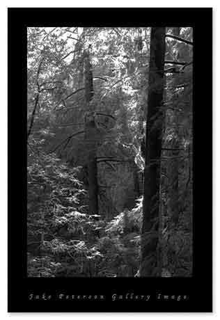 redwood-bk-5_15.jpg