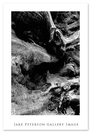 redwood-roots-5_21.jpg