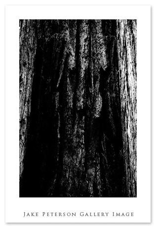 redwood-tree-bark-bw-5_20.jpg