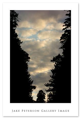sunset-in-redwoods-5_21.jpg