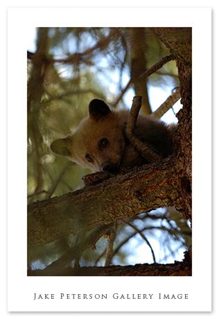 spring-cub-at-house-6_12.jpg